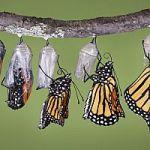 borboletas2
